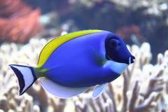 εξωτική θάλασσα ψαριών στοκ φωτογραφίες