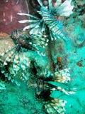 Εξωτική θαλάσσια ζωή και σκόπελος στοκ φωτογραφία