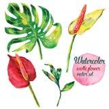 Εξωτική διανυσματική καθορισμένη απεικόνιση λουλουδιών Στοκ φωτογραφία με δικαίωμα ελεύθερης χρήσης