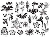 Εξωτική και τροπική μαύρη σκιαγραφία λουλουδιών που απομονώνεται στο άσπρο υπόβαθρο Συρμένο χέρι διανυσματικό άνθος στοκ εικόνες με δικαίωμα ελεύθερης χρήσης