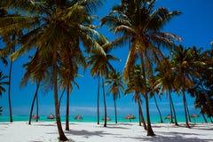 Εξωτική μόνη παραλία με τους φοίνικες και το μόνιππο -μόνιππο-loungues Στοκ φωτογραφία με δικαίωμα ελεύθερης χρήσης