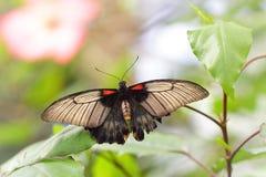 Εξωτική πεταλούδα σε μια πράσινη ζούγκλα Στοκ φωτογραφία με δικαίωμα ελεύθερης χρήσης