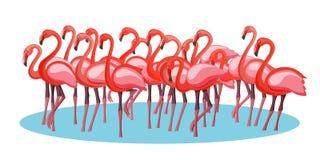 Εξωτική ρόδινη πορφυρή ομάδα πλήθους πουλιών φλαμίγκο που συλλέγει τη επιδεικτικότητα απεικόνιση αποθεμάτων