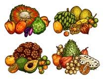 Εξωτική συγκομιδή σκίτσων φρούτων διανυσματική διανυσματική απεικόνιση
