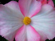 εξωτική τρυφερότητα λουλουδιών Στοκ φωτογραφία με δικαίωμα ελεύθερης χρήσης