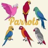 Εξωτικοί παπαγάλοι καθορισμένοι ελεύθερη απεικόνιση δικαιώματος