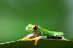 Εξωτικός βάτραχος στο ζωηρόχρωμο υπόβαθρο στοκ εικόνες