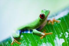 Εξωτικός βάτραχος στο ζωηρόχρωμο υπόβαθρο στοκ φωτογραφίες