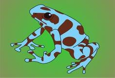 εξωτικός βάτραχος Στοκ Εικόνες