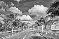 Εξωτικός δρόμος εθνικών οδών με τους πράσινους φοίνικες στον ηλιόλουστο θυελλώδη καιρό στοκ εικόνες