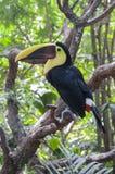 Εξωτικός ζωικός toucan στοκ εικόνες