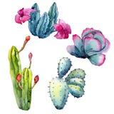 Εξωτικός κάκτος wildflower σε ένα ύφος watercolor που απομονώνεται απεικόνιση αποθεμάτων