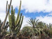 Εξωτικός κήπος με τους φοίνικες και τον κάκτο στοκ φωτογραφίες