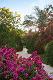 εξωτικός κήπος στοκ φωτογραφία
