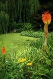 εξωτικός κήπος στοκ εικόνες