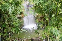 Εξωτικός καταρράκτης στη φύση τροπικών δασών στοκ εικόνες