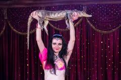 Εξωτικός κροκόδειλος εκμετάλλευσης χορευτών κοιλιών επάνω από το κεφάλι στοκ εικόνες