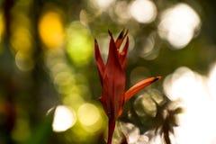 Εξωτικός κόκκινος παράδεισος οφθαλμών λουλουδιών reginae Strelitzia στοκ εικόνα με δικαίωμα ελεύθερης χρήσης