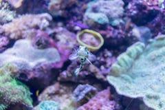 Εξωτικός λίγο ψάρι Στοκ εικόνες με δικαίωμα ελεύθερης χρήσης