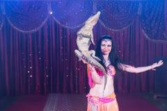 Εξωτικός μικρός κροκόδειλος εκμετάλλευσης χορευτών κοιλιών στοκ φωτογραφίες
