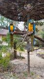 εξωτικός παπαγάλος στοκ εικόνα