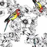 Εξωτικός παπαγάλος πουλιών με το ζωηρόχρωμο άνευ ραφής σχέδιο λουλουδιών η διακοσμητική εικόνα απεικόνισης πετάγματος ραμφών το κ ελεύθερη απεικόνιση δικαιώματος
