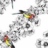 Εξωτικός παπαγάλος πουλιών με το ζωηρόχρωμο άνευ ραφής σχέδιο λουλουδιών η διακοσμητική εικόνα απεικόνισης πετάγματος ραμφών το κ απεικόνιση αποθεμάτων