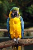 Εξωτικός παπαγάλος στοκ εικόνες