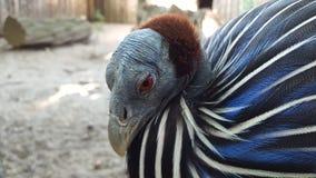 Εξωτικός στενός επάνω πουλιών στοκ φωτογραφία με δικαίωμα ελεύθερης χρήσης