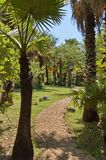Εξωτικός τροπικός κήπος με το φοίνικα στην πόλη ήλιων στοκ φωτογραφίες με δικαίωμα ελεύθερης χρήσης