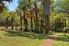 Εξωτικός τροπικός κήπος με το φοίνικα στην πόλη ήλιων στοκ φωτογραφία με δικαίωμα ελεύθερης χρήσης
