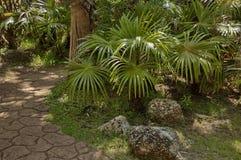 Εξωτικός τροπικός κήπος με το φοίνικα στην πόλη ήλιων στοκ εικόνες