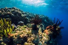 Εξωτικός υποβρύχιος κόσμος με τα κοράλλια και ψάρια στους τροπικούς κύκλους στοκ φωτογραφία