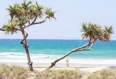Εξωτικός φοίνικας βλάστησης στη χρυσή παραλία ακτών στην Αυστραλία στοκ εικόνα με δικαίωμα ελεύθερης χρήσης