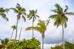 Εξωτικός φοίνικας σε μια παραλία στοκ φωτογραφίες