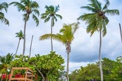 Εξωτικός φοίνικας σε μια παραλία στοκ εικόνες
