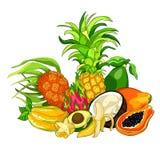 Εξωτικός papaya καρύδων αβοκάντο μπανανών φρούτων pandan ανανάς, pi ελεύθερη απεικόνιση δικαιώματος