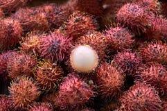 Εξωτικός rambutan τριχωτός φρούτων με το τριχωτό δέρμα στοκ εικόνες