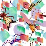 Εξωτικό άγριο έντομο αραχνών σε ένα ύφος watercolor Άνευ ραφής πρότυπο ανασκόπησης απεικόνιση αποθεμάτων