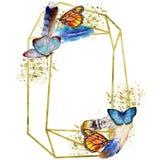 Εξωτικό άγριο έντομο πεταλούδων σε ένα ύφος watercolor Τετράγωνο διακοσμήσεων συνόρων πλαισίων ελεύθερη απεικόνιση δικαιώματος