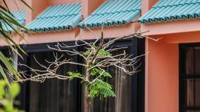 Εξωτικό δέντρο και πράσινα φύλλα Στοκ φωτογραφία με δικαίωμα ελεύθερης χρήσης
