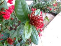 Εξωτικό κόκκινο λουλούδι με τη νανο επίδραση Στοκ εικόνα με δικαίωμα ελεύθερης χρήσης