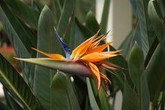 εξωτικό λουλούδι Στοκ εικόνα με δικαίωμα ελεύθερης χρήσης