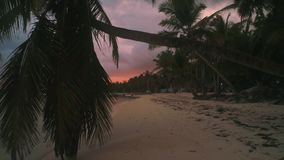 Εξωτικό νησί Φοίνικες καρύδων και τροπική παραλία Καλοκαιρινές διακοπές στις Καραϊβικές Θάλασσες απόθεμα βίντεο