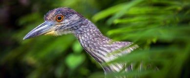 Εξωτικό πουλί Στοκ Εικόνα