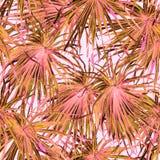 εξωτικό πρότυπο Υπόβαθρο θερινού watercolor Στοκ εικόνες με δικαίωμα ελεύθερης χρήσης