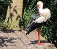 Εξωτικό τροπικό πουλί στοκ εικόνες