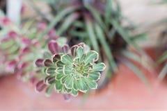 εξωτικό φυτό Στοκ εικόνα με δικαίωμα ελεύθερης χρήσης