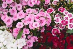Εορταστικά σύσταση και υπόβαθρο λουλουδιών Δέσμη των λουλουδιών για το val Στοκ εικόνες με δικαίωμα ελεύθερης χρήσης