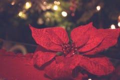Εορταστικές διακοσμήσεις Χριστουγέννων με τα λουλούδια Στοκ Φωτογραφίες